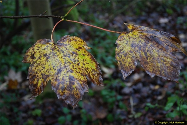 2014-11-21 The Woodland in Winter. Wendover Woods, Buckinhhamshire.  (44)044