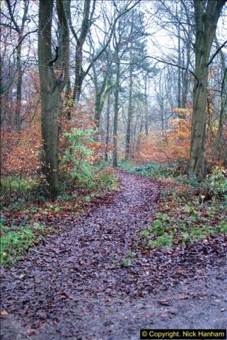2014-11-21 The Woodland in Winter. Wendover Woods, Buckinhhamshire.  (45)045