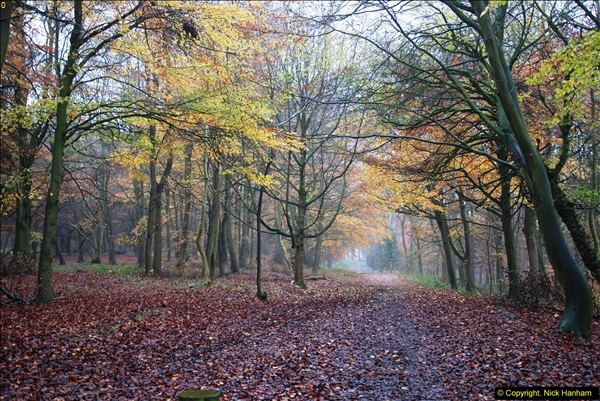 2014-11-21 The Woodland in Winter. Wendover Woods, Buckinhhamshire.  (50)050