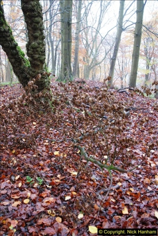 2014-11-21 The Woodland in Winter. Wendover Woods, Buckinhhamshire.  (52)052