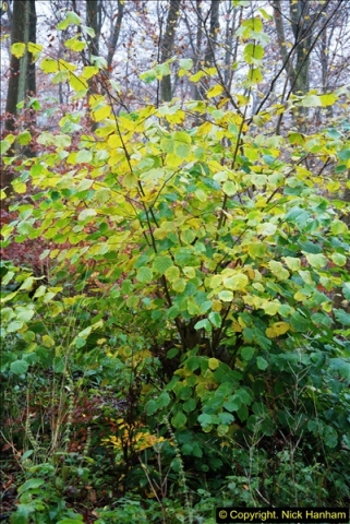 2014-11-21 The Woodland in Winter. Wendover Woods, Buckinhhamshire.  (59)059