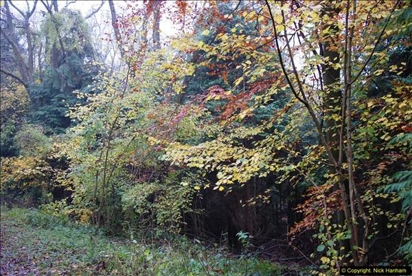 2014-11-21 The Woodland in Winter. Wendover Woods, Buckinhhamshire.  (62)062