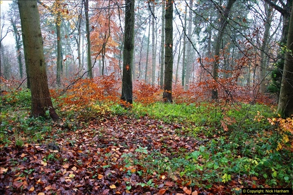 2014-11-21 The Woodland in Winter. Wendover Woods, Buckinhhamshire.  (64)064