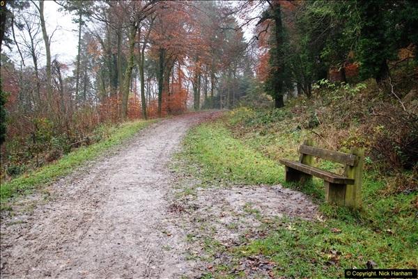 2014-11-21 The Woodland in Winter. Wendover Woods, Buckinhhamshire.  (66)066