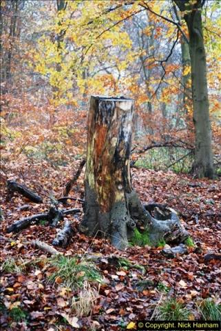 2014-11-21 The Woodland in Winter. Wendover Woods, Buckinhhamshire.  (77)077