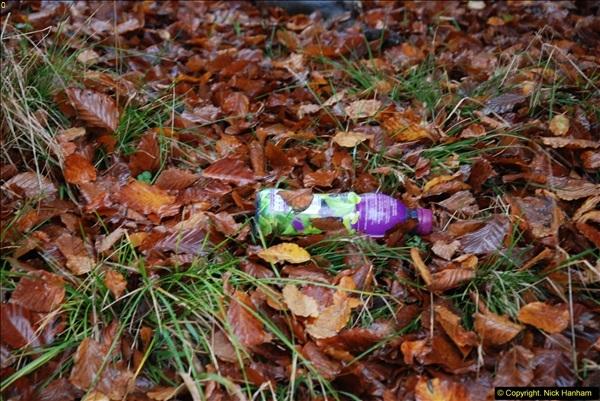 2014-11-21 The Woodland in Winter. Wendover Woods, Buckinhhamshire.  (80)080