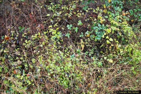 2014-11-21 The Woodland in Winter. Wendover Woods, Buckinhhamshire.  (85)085