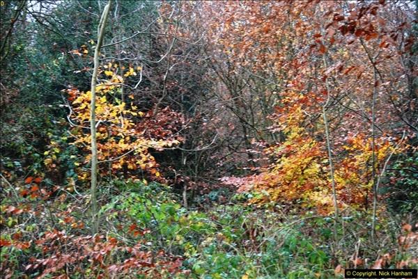 2014-11-21 The Woodland in Winter. Wendover Woods, Buckinhhamshire.  (87)087