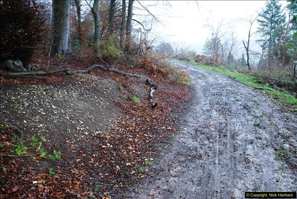 2014-11-21 The Woodland in Winter. Wendover Woods, Buckinhhamshire.  (93)093