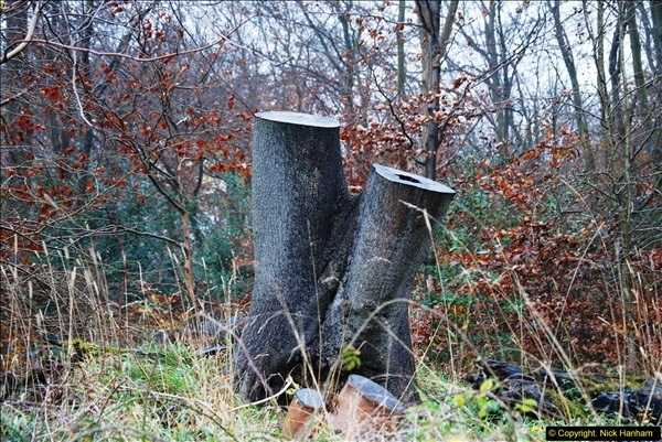 2014-11-21 The Woodland in Winter. Wendover Woods, Buckinhhamshire.  (96)096