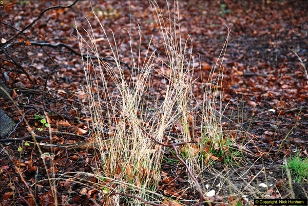 2014-11-21 The Woodland in Winter. Wendover Woods, Buckinhhamshire.  (98)098