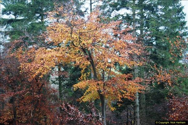 2014-11-21 The Woodland in Winter. Wendover Woods, Buckinhhamshire.  (99)099