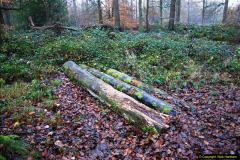 2014-11-21 The Woodland in Winter. Wendover Woods, Buckinhhamshire.  (10)010