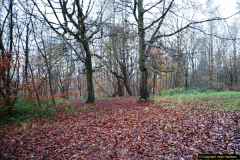 2014-11-21 The Woodland in Winter. Wendover Woods, Buckinhhamshire.  (31)031