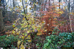 2014-11-21 The Woodland in Winter. Wendover Woods, Buckinhhamshire.  (46)046