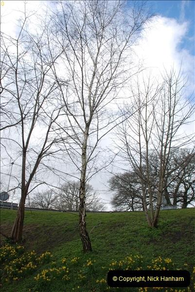2013-03-16 Broadstone, Dorset.  (6)013