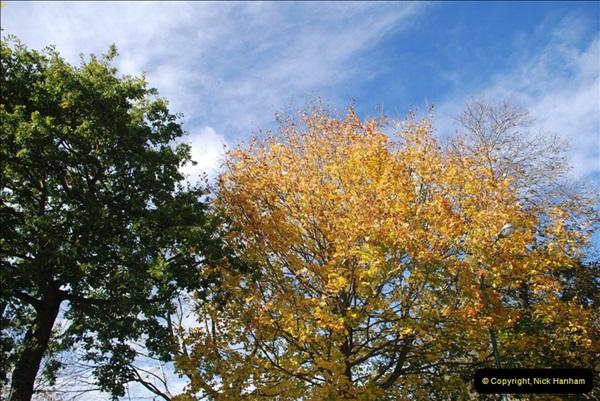 TREES (12)271