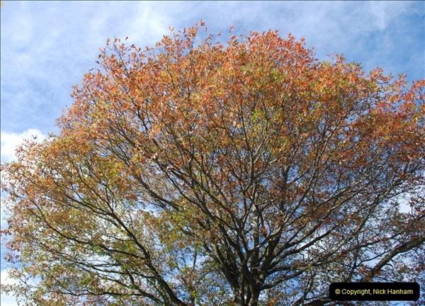 TREES (13)272