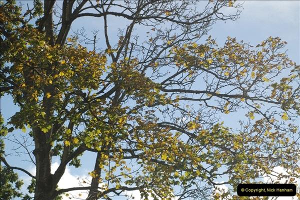 TREES (16)275