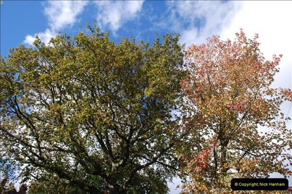 TREES (17)276