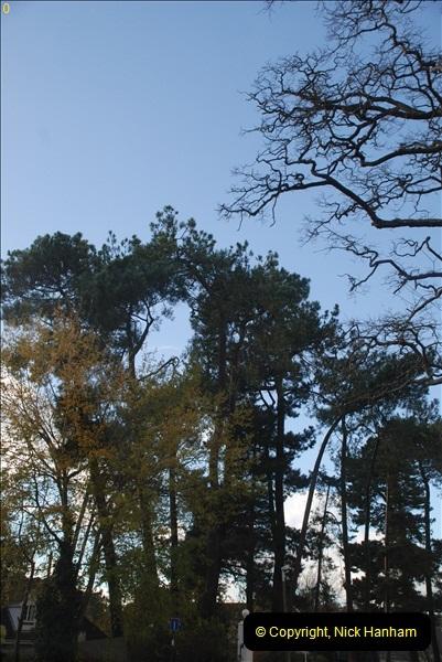 TREES (20)279
