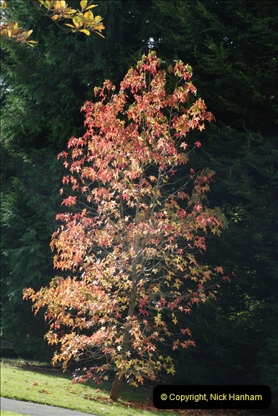 TREES (22)281