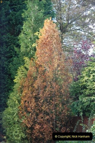 TREES (23)282