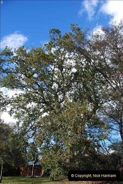 TREES (25)284