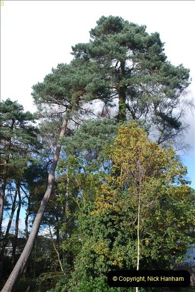 TREES (26)285