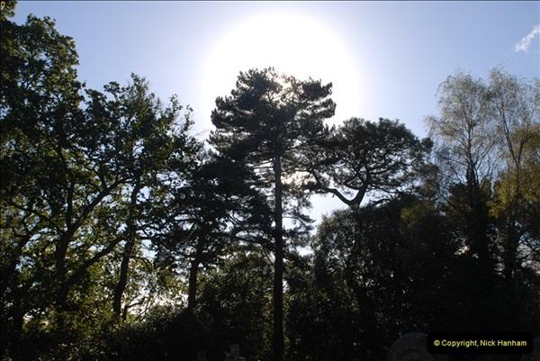 TREES (30)289