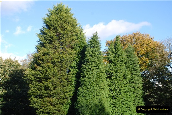 TREES (31)290