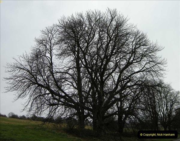 TREES (3)262