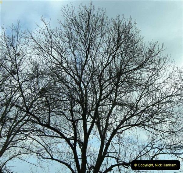 TREES (4)263