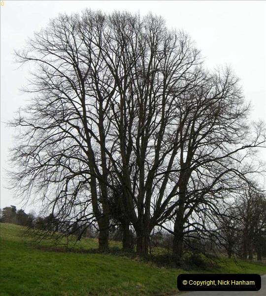 TREES (6)265