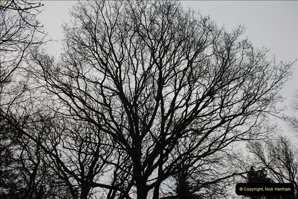 2013-03-09 Poole Park, Poole, Dorset.  (2)005