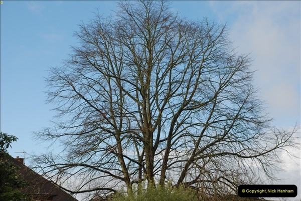 2013-03-16 Broadstone, Dorset.  (2)009