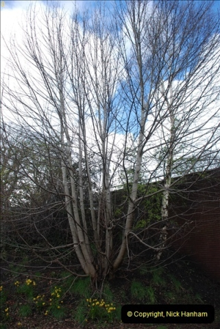 2013-03-16 Broadstone, Dorset.  (5)012
