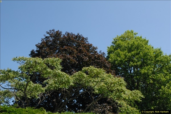 2013-07-19 Barrington Court (NT) Ilminster, Somerset.  (5)071