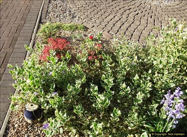 2014-04-15 Your Host's garden. (5)224