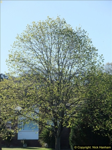 2014-04-16 Parkstone, Poole, Dorset.229