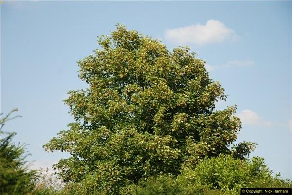 2014-07-22 Dumbleton Hall, Dumbleton, Worcestershire.  (3)239