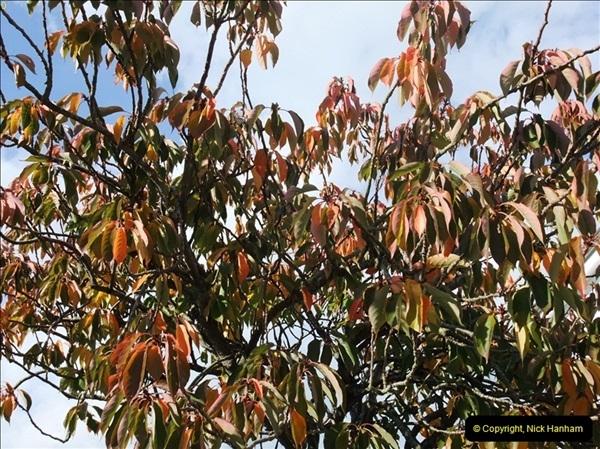 TREES (10)269