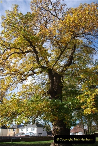TREES (11)270