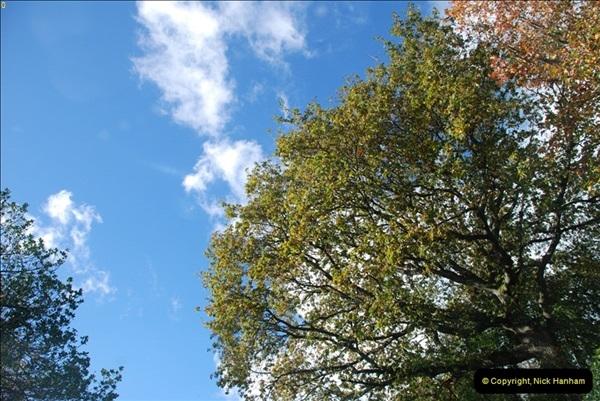 TREES (18)277