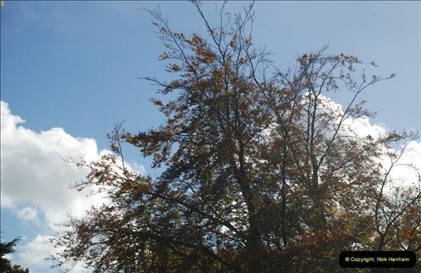 TREES (19)278