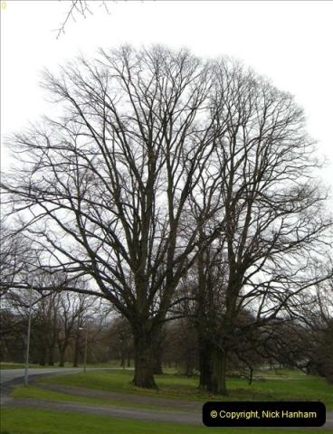 TREES (2)261