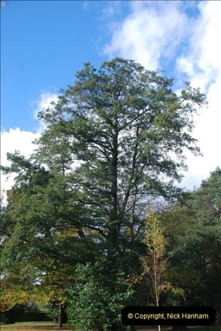 TREES (27)286