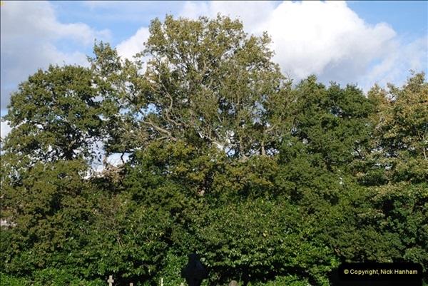 TREES (32)291
