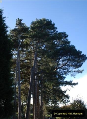 TREES (34)293