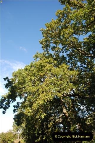 TREES (36)295